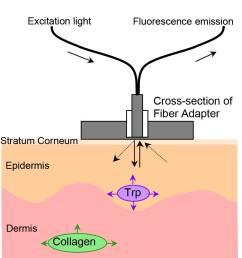 endogenous skin fluorescence in vivo on human skin [ 920 x 1005 Pixel ]