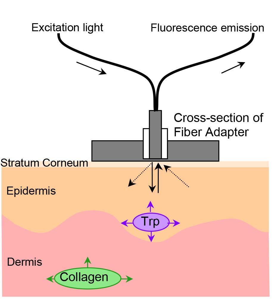 hight resolution of endogenous skin fluorescence in vivo on human skin