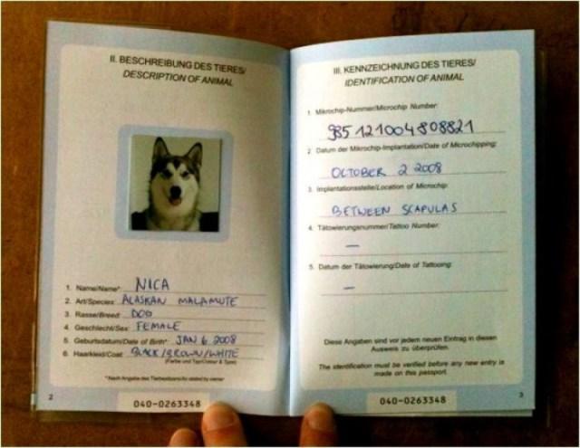 Dacă ai deja un pașaport pentru animalele de companie, nu e nevoie să obți unul nou.