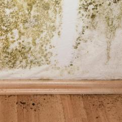 How Much Does It Cost To Remodel A Kitchen Storage Cabinets With Doors Mold Remediation | Eliminating In Household