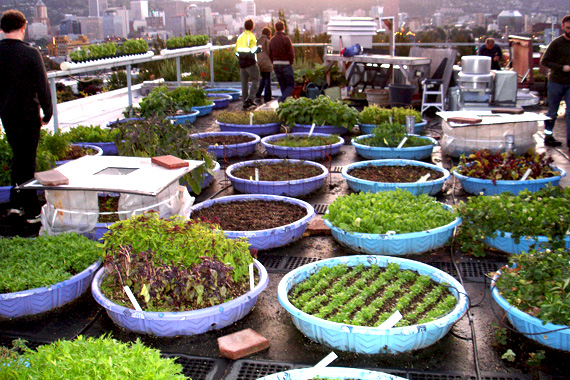How To Build A Rooftop Community Garden Rooftop Community Gardens