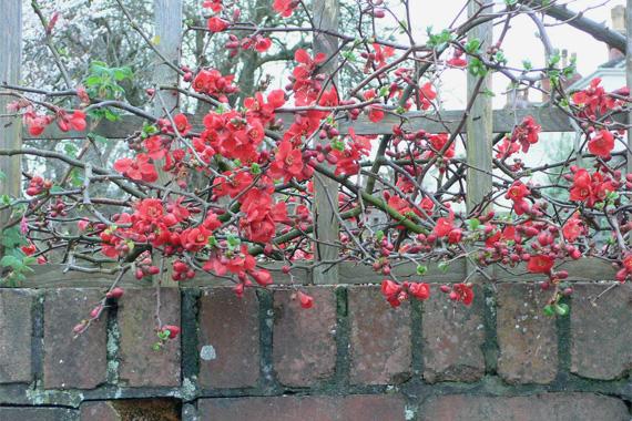 9 Winter Garden Plants That Dazzle Even When It Snows