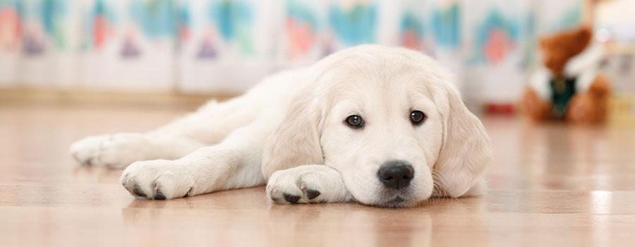 Wohnung  Hundede