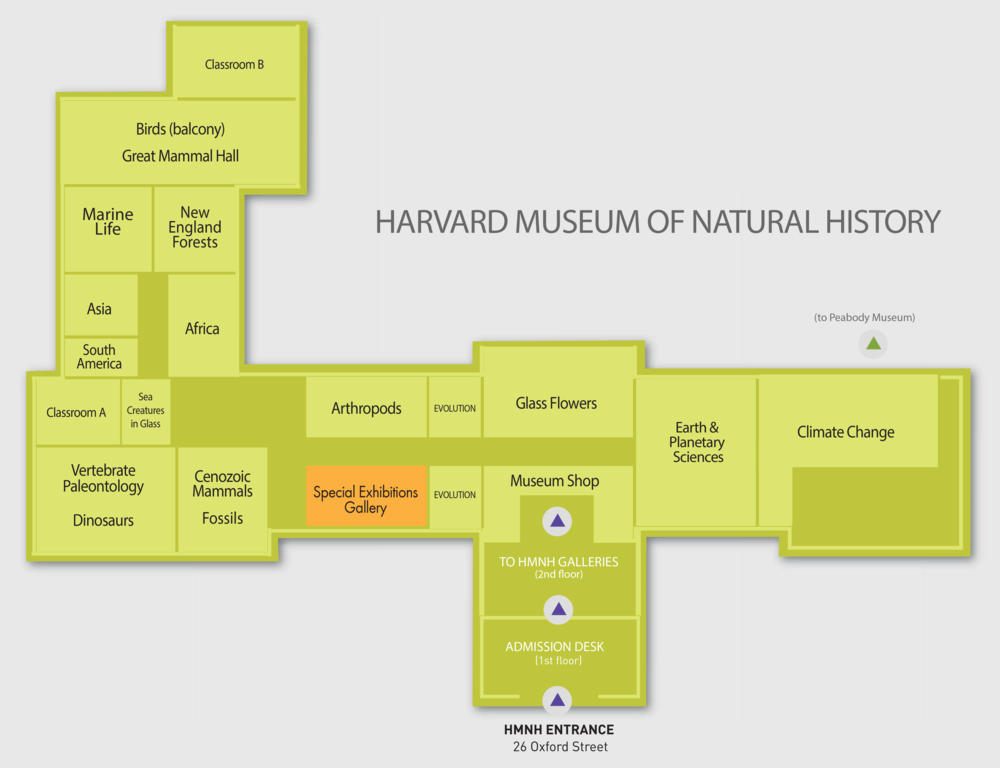 Exhibitions  Harvard Museum of Natural History