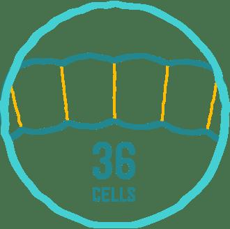 Zellen-Anzahl