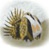 Sagehen Creek Basin Biota Documentation Project icon