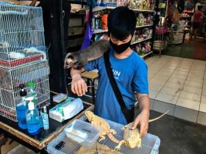 """Tick clock bomb"": A wild savage trade in Southeast Asia risking future pandemic"