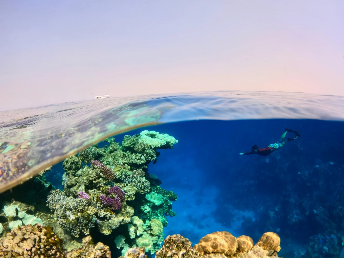 <p>Researchers exploring the Red Sea</p>