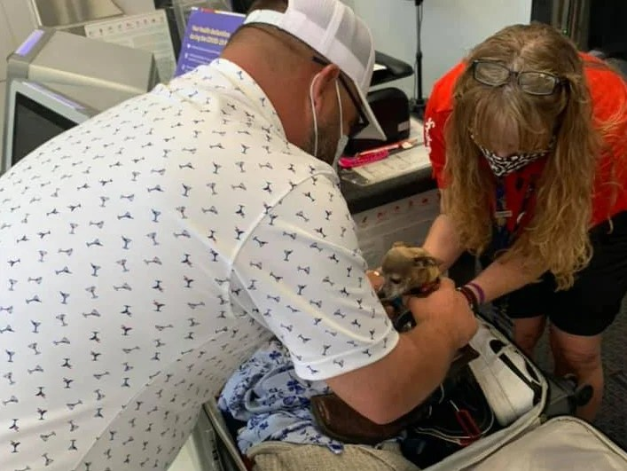 , Couple gets to airport to find luggage is overweight because of stowaway dog, The Evepost BBC News