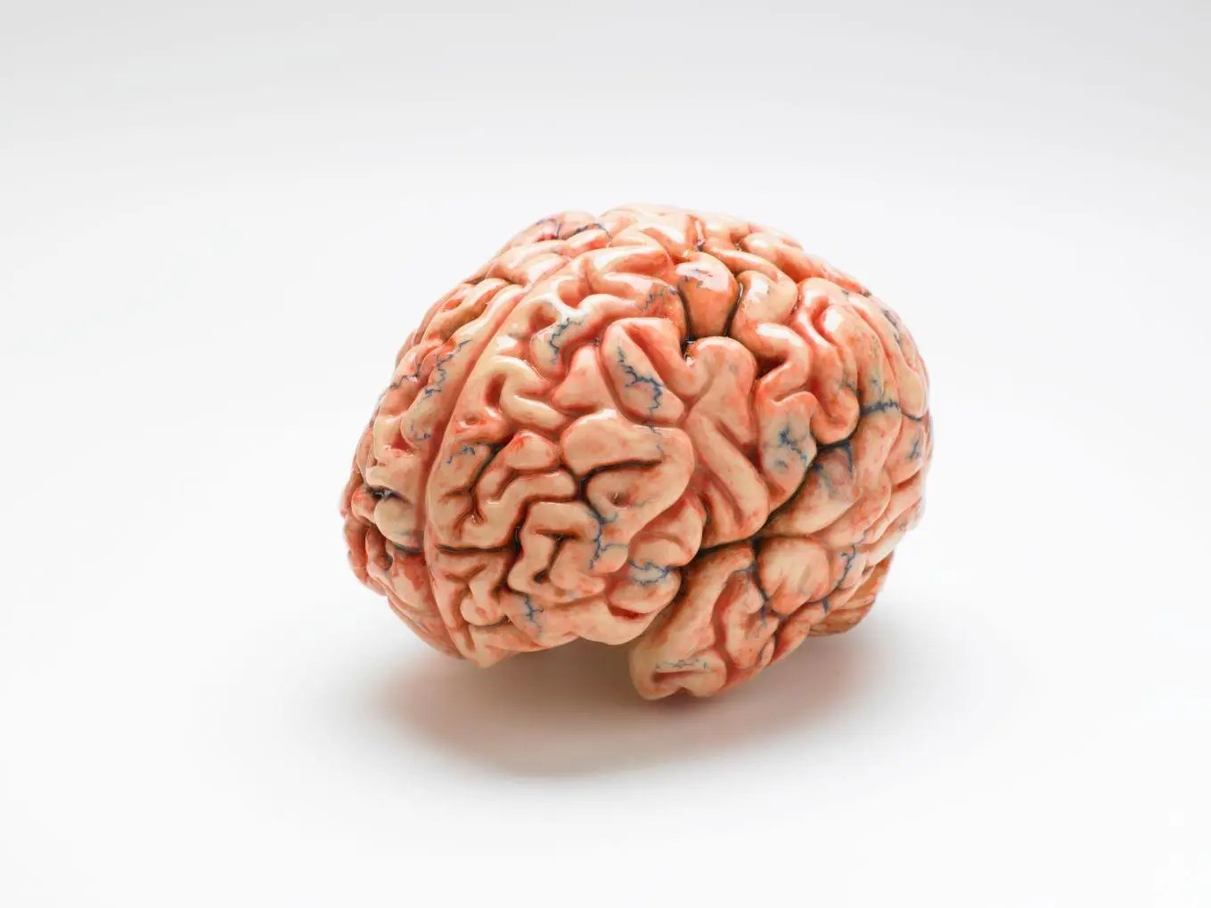 Human Brains Can Hold 10 Times More Information Than