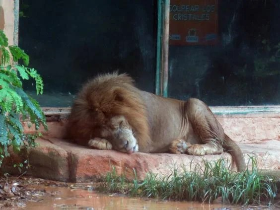 puerto-rico-zoo-02.jpg