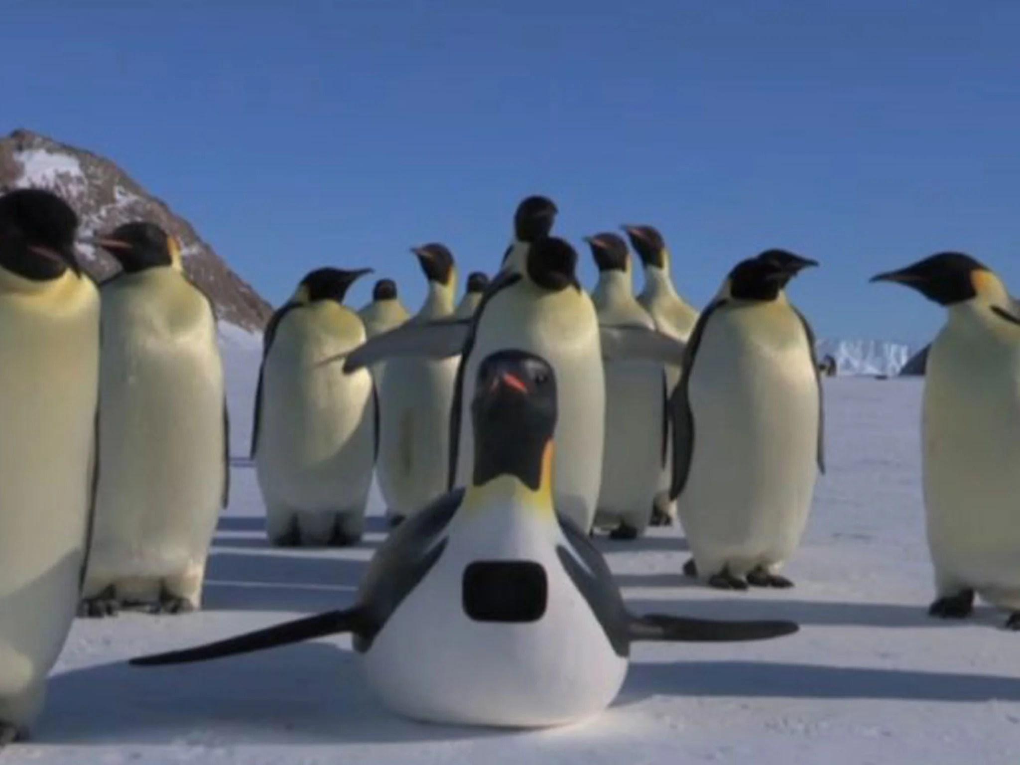 First Penguincam Now Squidcam