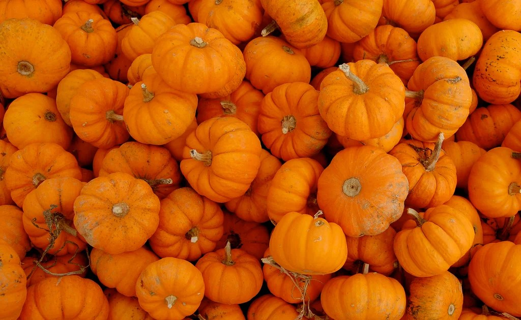 Fall Sunflower Wallpaper Save Our Pumpkins Uk Wastes 18 000 Tons Of Food While