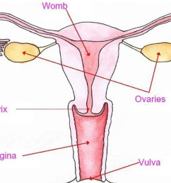 half of young women unable to locate vagina and 65 find it difficult to say the word [ 2048 x 1536 Pixel ]