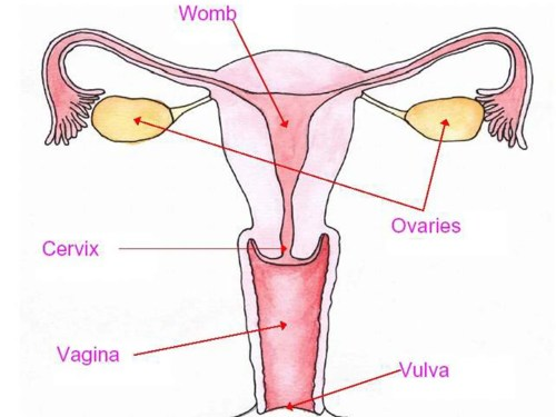small resolution of half of young women unable to locate vagina and 65 find it difficult to say the word