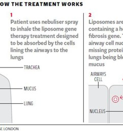patients who received the gene therapy showed a significant if modest benefit in tests of lung function compared with the placebo group there were no  [ 2544 x 1536 Pixel ]
