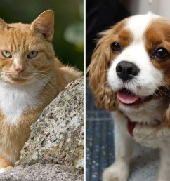 cats vs dogs scientists confirm that felines are better from an evolutionary perspective [ 2048 x 1536 Pixel ]