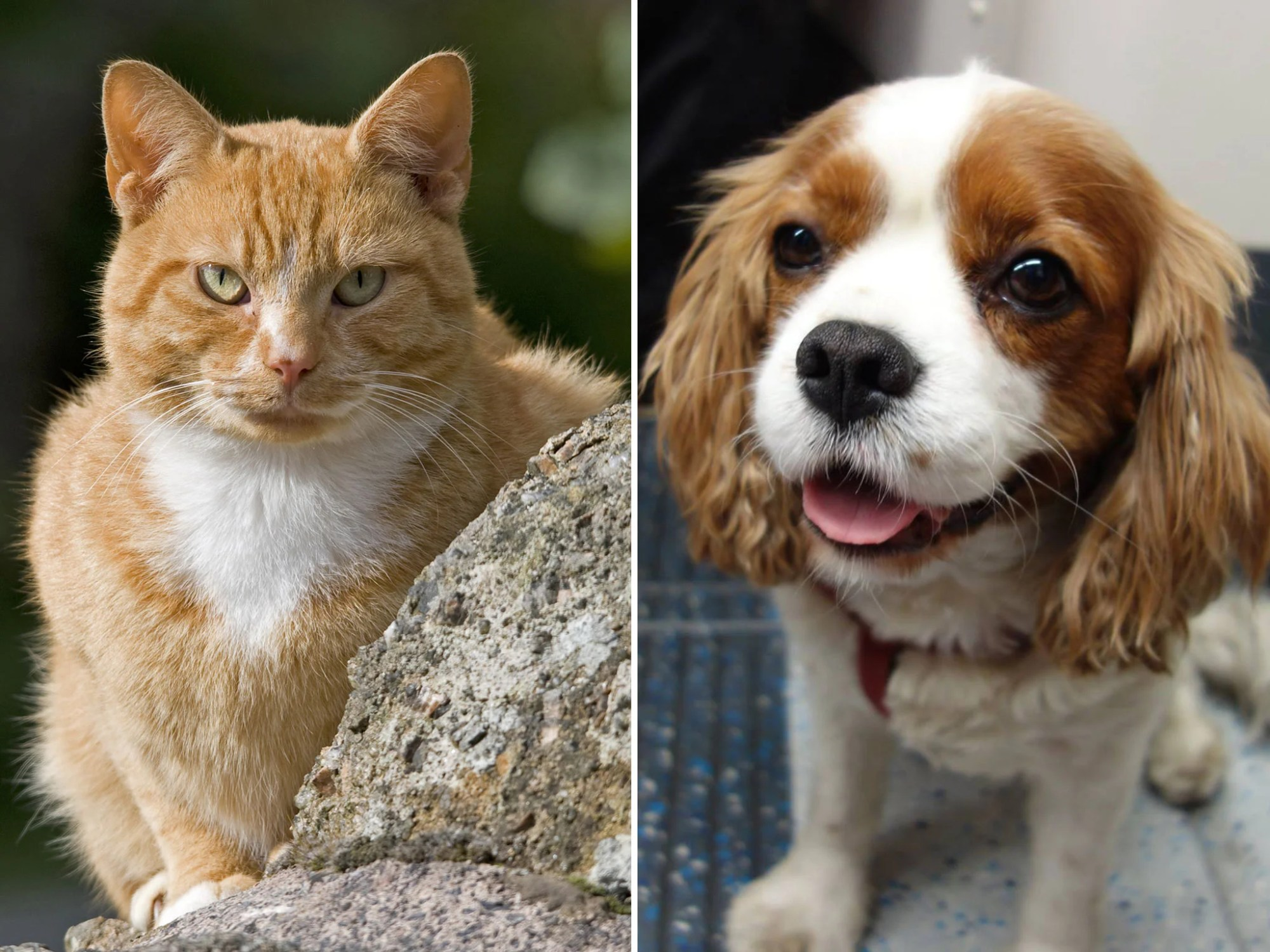 hight resolution of cats vs dogs scientists confirm that felines are better from an evolutionary perspective