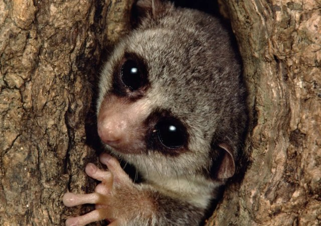 Nearly every species of lemur at risk of extinction
