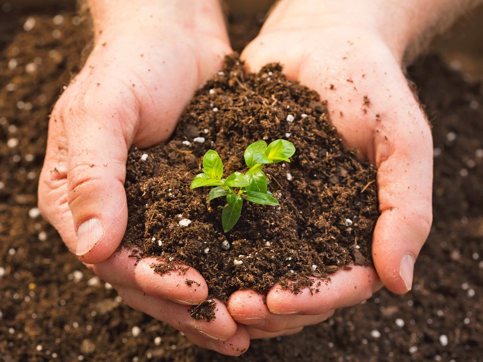 What S The Best Type Of Soil For Plants