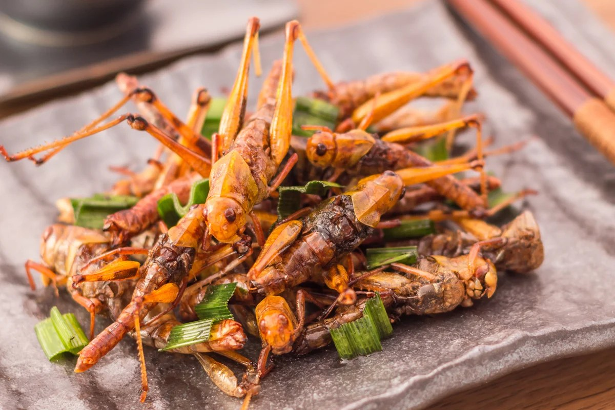 Entomophagy How Giving Up Meat And Eating Bugs Can Help