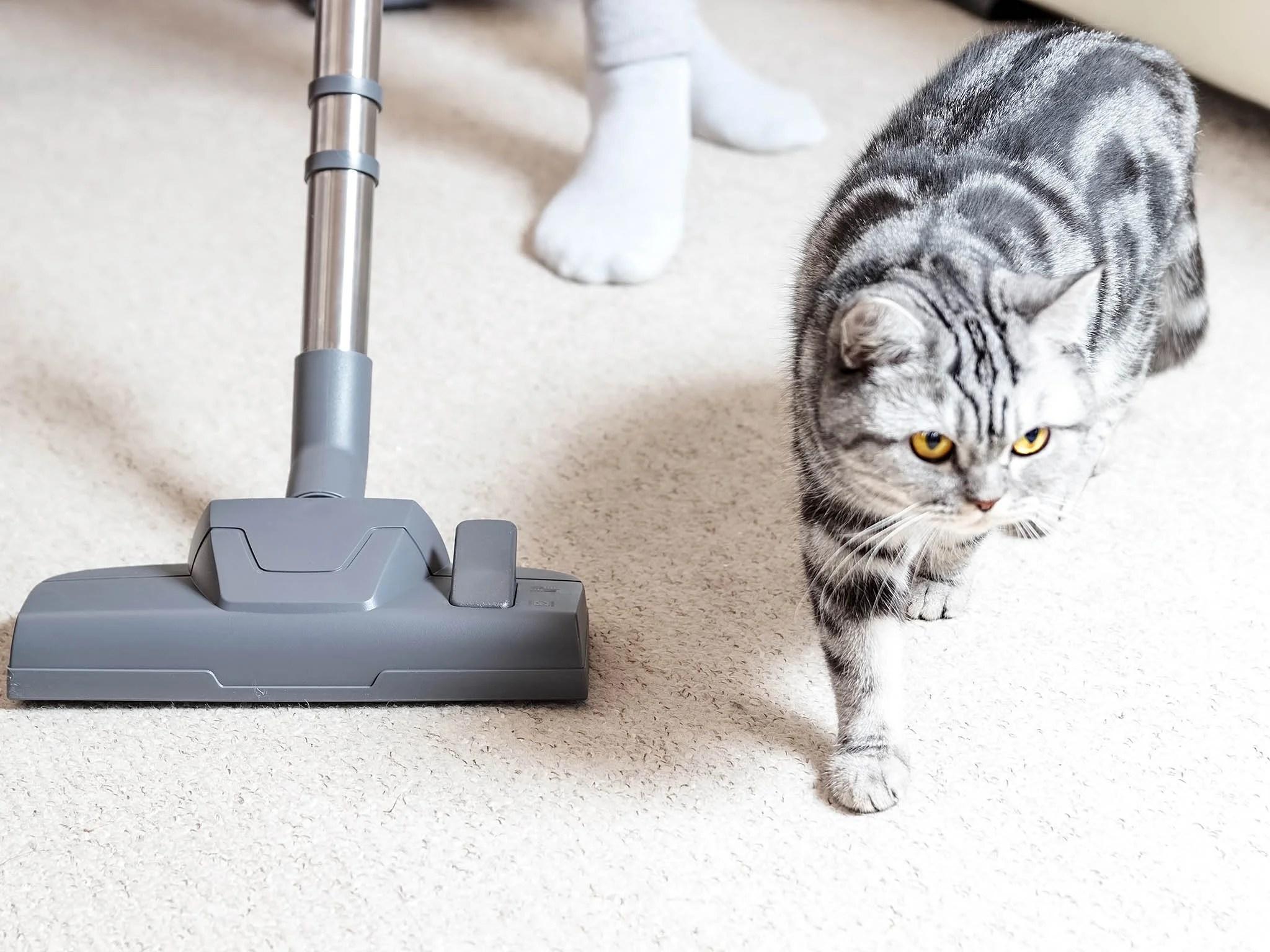 11 best pet vacuum