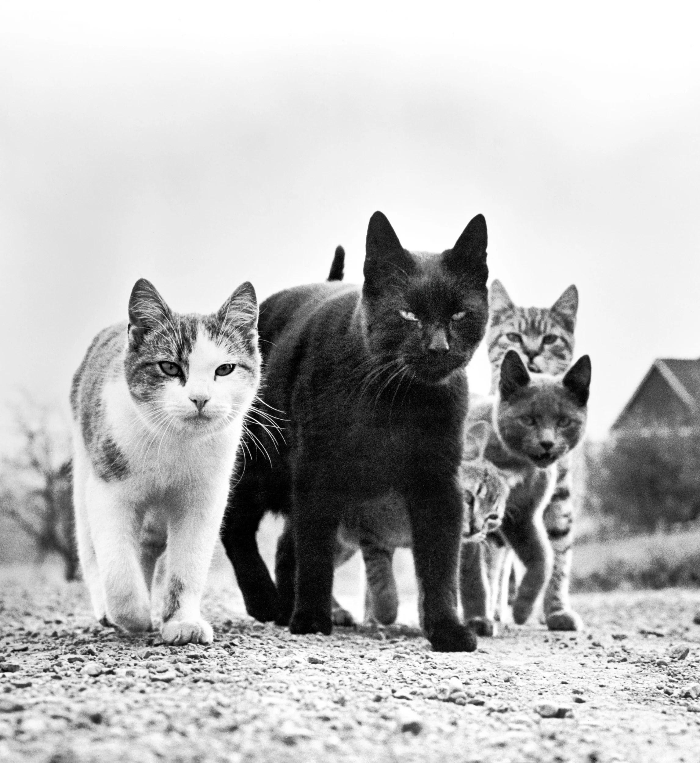 long before catsofinstagram walter