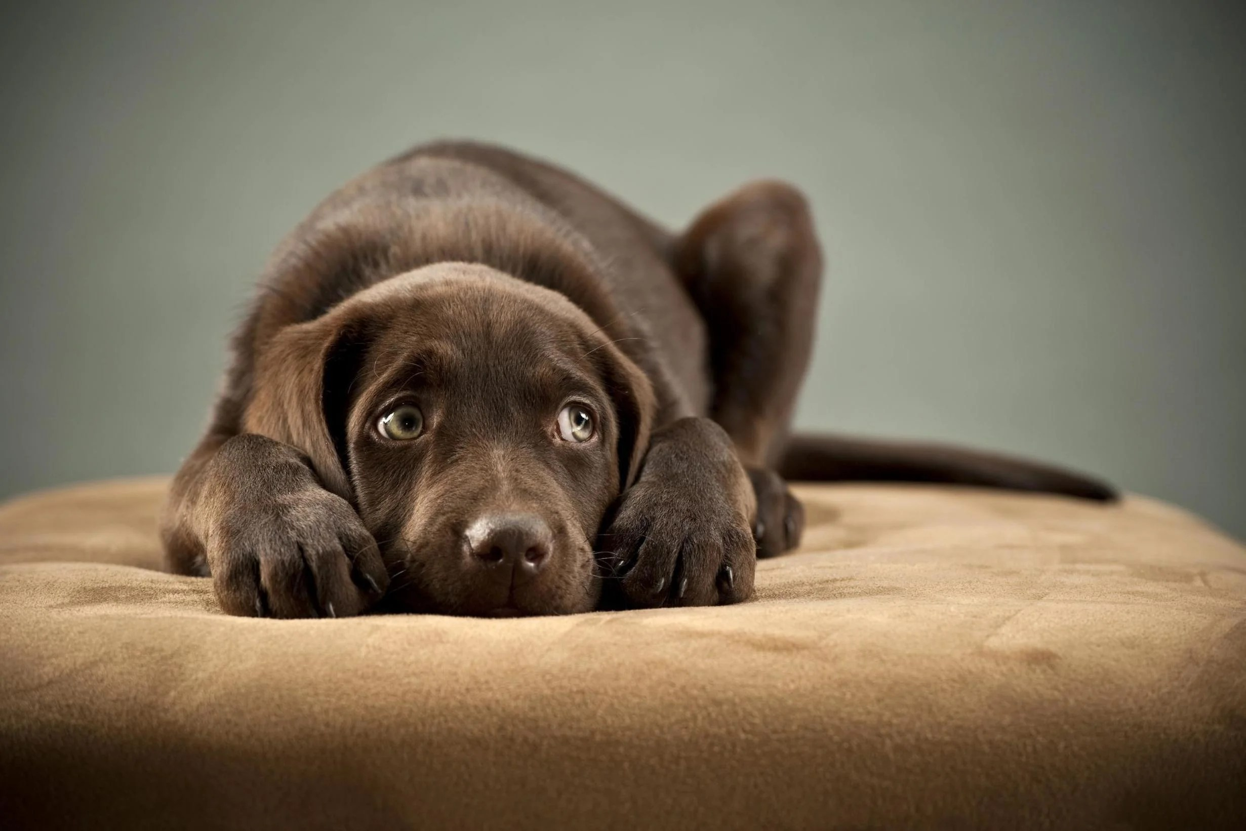Majority Of Dogs Suffer From Anxiety Study Finds The Independent The Independent