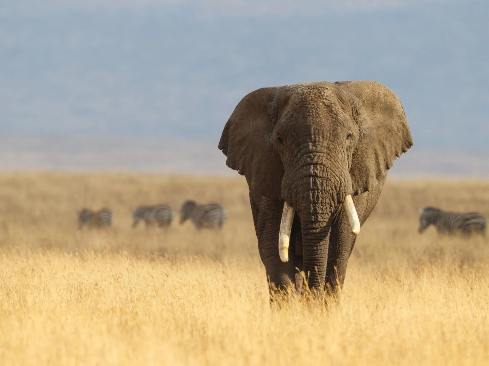 Namibia culls elephants to 'protect crops and farmers'