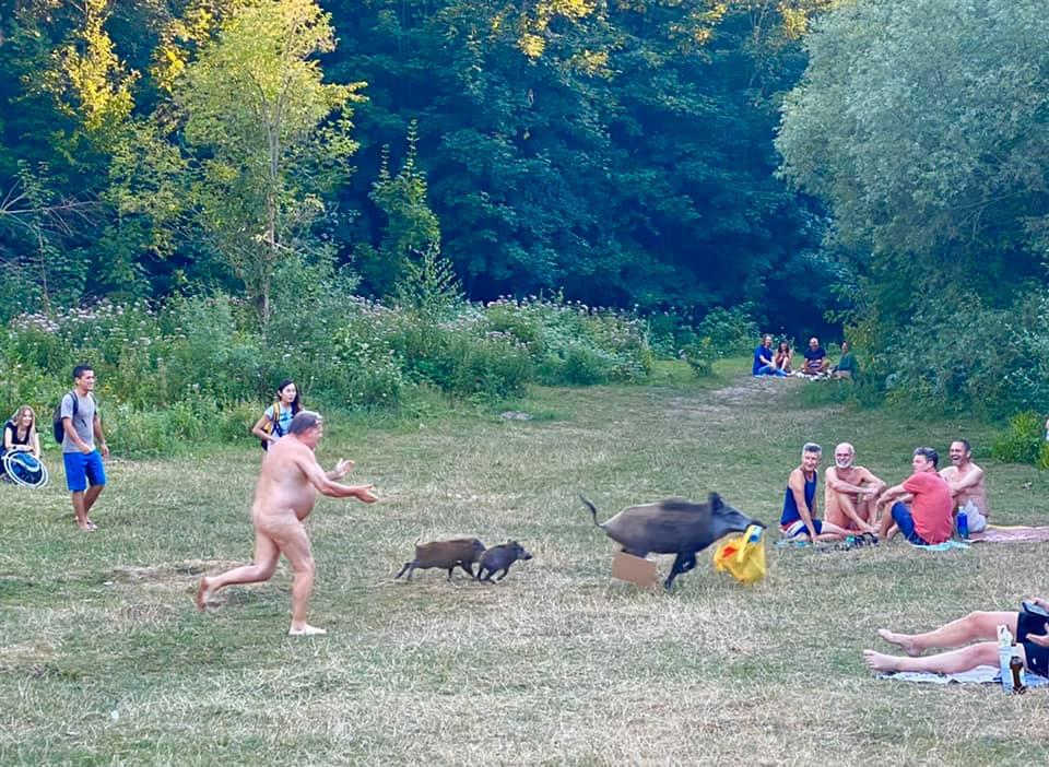 Onlookers were amused by the sight of a naked man chasing a wild boar carrying his belongings