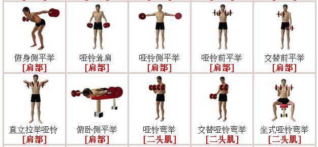 啞鈴鍛煉方法肌肉鍛煉教學