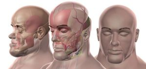 Status of Face Transplant patients now?