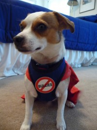 Dog with cape and Anti-bully insignia