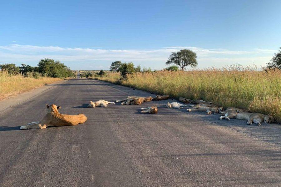 Foto: Richard Sowry/Kruger National Park