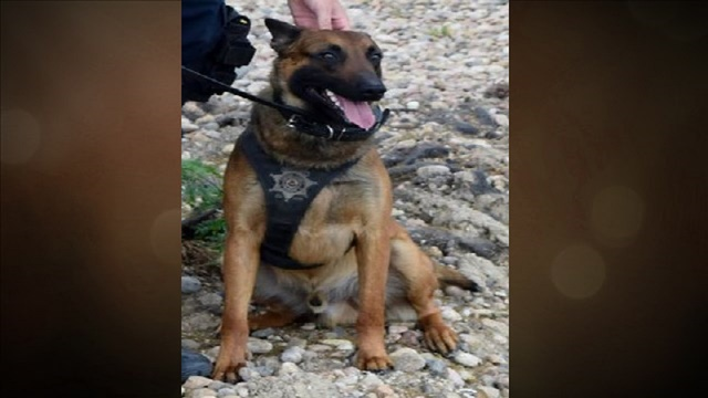 Colorado police dog opens gate with paw to rescue injured partner
