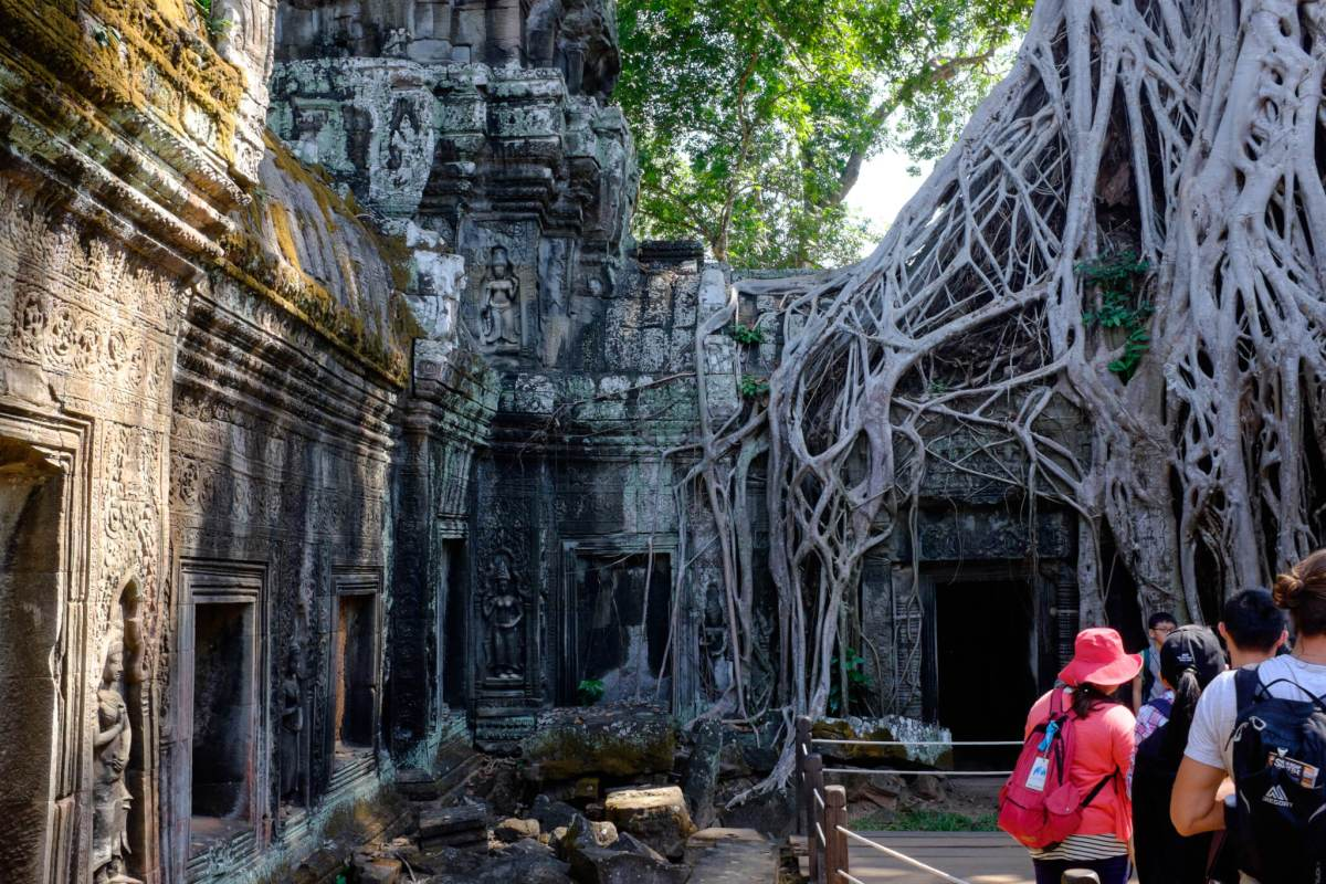 Ta Prohm Tomb Raider tree