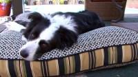 Slumber Jax Dog Bed Indoor /Outdoor Pillow  Welcome to ...