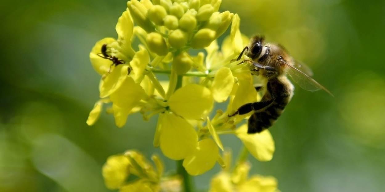 en albanie les abeilles font leur miel