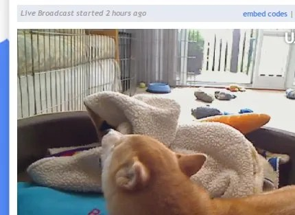 The Best Free Web Cams To Watch When You're Bored