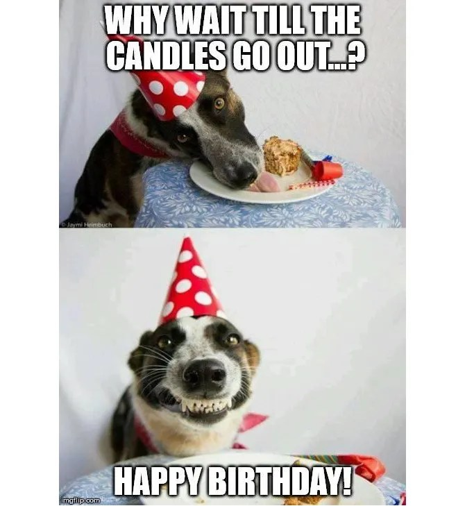 Meme di compleanno per cani e torte