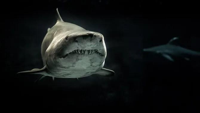 Sfondo di squalo grigio