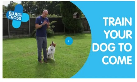 Blue Cross Free Dog Training Course Online