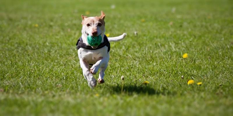 gratis-online-dog-training