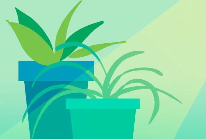 Творческое Хобби Садоводство