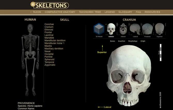 Сайт виртуальной анатомии eSkeletons