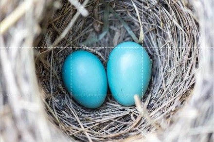 Eggs placed at the center of a photo
