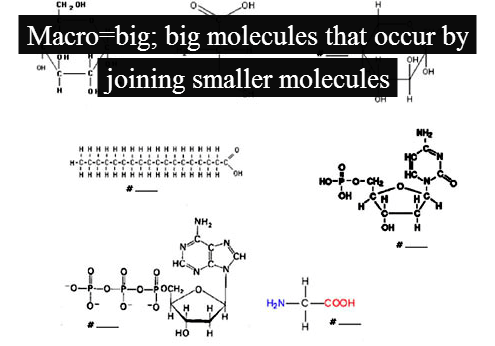 A fun and easy way to remember 'Macromolecules' in Biology