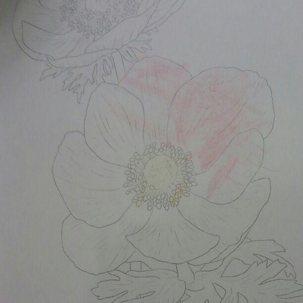 メルカリ - hide 1008円 優しい大人の塗り絵 クーピーbox 【画材】 (¥900