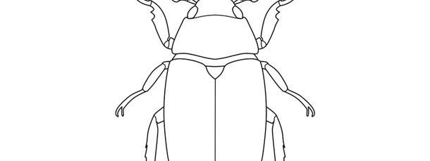 Scarab Beetle Template