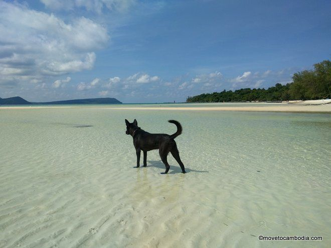 dogs on Cambodia islands